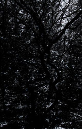 joubeen mireskandari - b&w photography - dark trees - into the woods - trees - classic photography