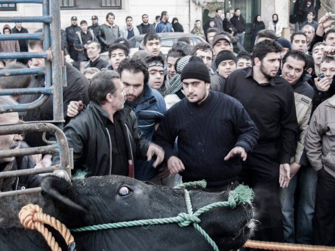 the sacrifice - bull killing - killing bull in iran - iranian ritual - ritual - love the blood - dastan gallery - dastan art gallery - joubeen mirekandari